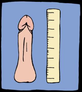Penis und Vorhaut